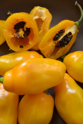 Chilli Rocoto Yellow, 10 semien